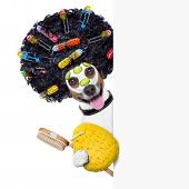 stock photo of beside  - wellness dog with hair rollers and sponge beside a banner - JPG