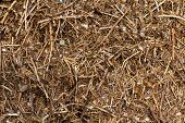stock photo of fire ant  - Anthill of a sunny day  - JPG