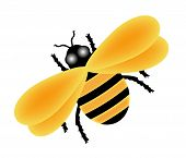 image of bumble bee  - illustration of yellow bumble bee on white - JPG