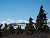 stock photo of denali national park  - Mount McKinley peeks above snow - JPG