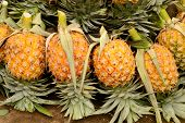 picture of sabbatical  - pineapple Fruit in rural market Chiang Mai Thailand - JPG