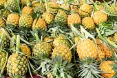 picture of sabbatical  - pineapple Fruit in rural market - JPG