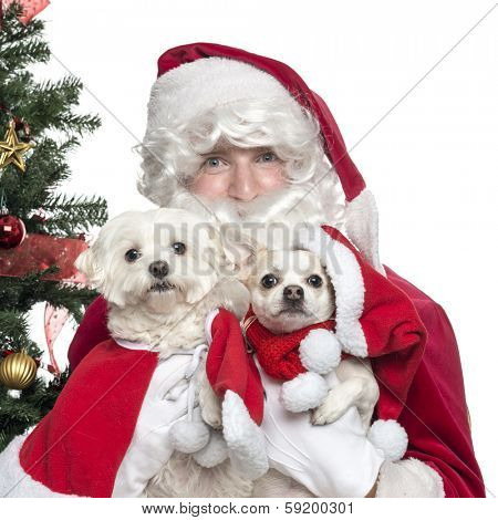 Close-up of Santa Claus holding lapdogs, isolated on white