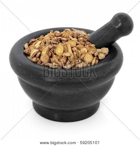 Scutellaria root chinese herbal medicine in a black stone mortar with pestle over white background. Huang qin. Skullcap.