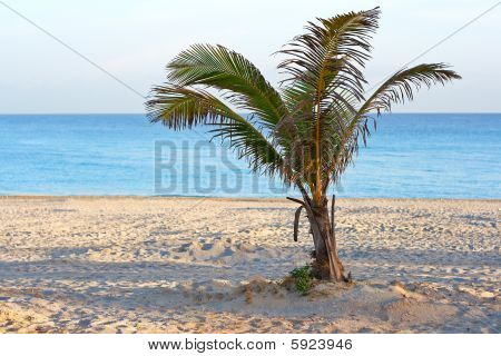 A Lonely Palm Tree In A Deserted Beach In The Morning
