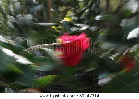 Impressionist Red Flower In Motion