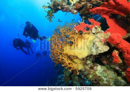 Buceadores explorar arrecifes de coral