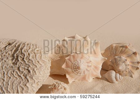 brain coral and seashells on white sand beach in sunny vacation day