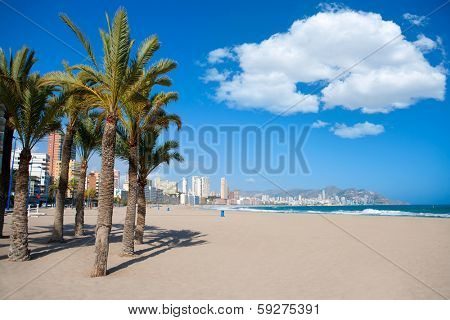 Benidorm Alicante beach palm trees and Mediterranean sea of Spain