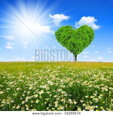 field of marguerites with tree in the shape of heart