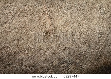 Red Deer Textured Pelt