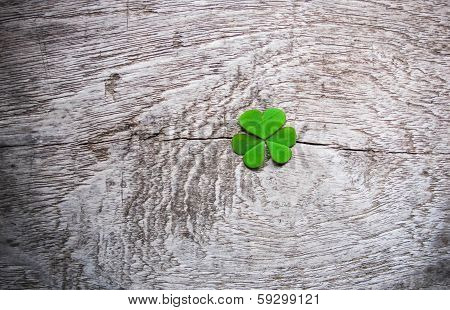 Fresh Green Clover Leaves Over Wooden Background, Lucky Shamrock