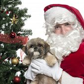 Close-up of Santa Claus holding lapdog, isolated on white poster