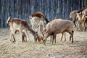image of deer family  - the deer family living in the zoo - JPG