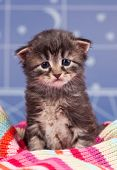 foto of blue tabby  - Sad cute kitten in a warm knitted scarf over light blue background - JPG