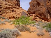 stock photo of valley fire  - Desert flora thrives in desert of Valley of Fire State Park - JPG