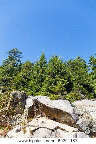 Evergreens Over Boulders Under Blue Sky