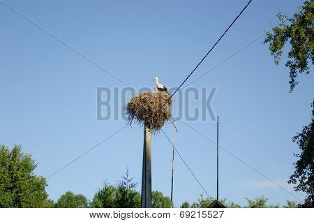 Stork Nest On Electric Pole On Blue Sky Background