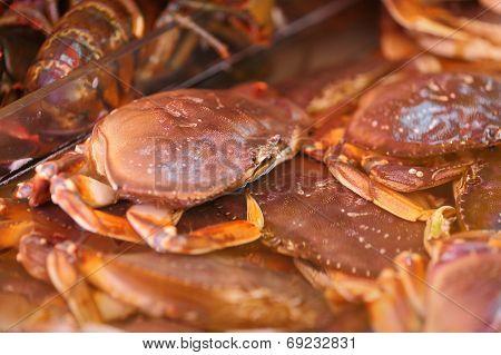 Crab in Market