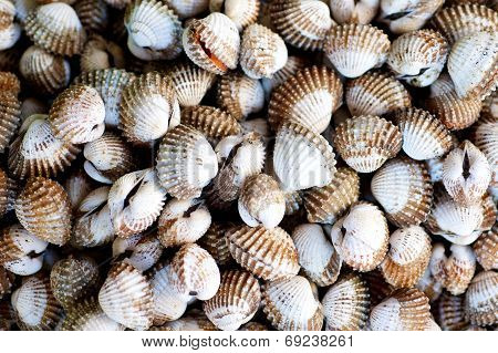 Raw Clams In The Market
