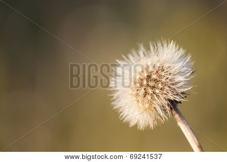 Wild Flower Closeup