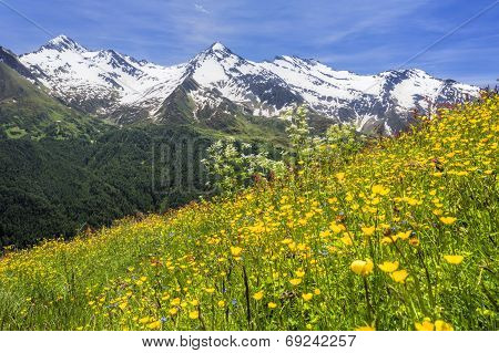Beautiful flower meadow in the Italian alps Europe