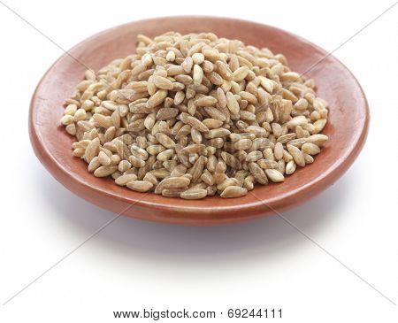 spelt, farro, primitive wheat