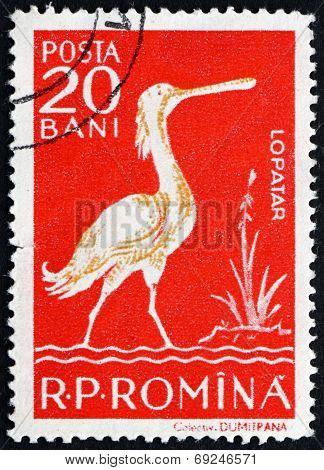 Postage Stamp Romania 1957 White Spoonbill