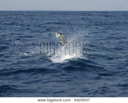 Sailfish saltwater sport fishing jumping