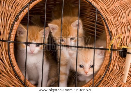 Kittens Behind Bars