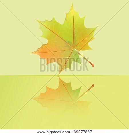 Autumn wet maple leaf.