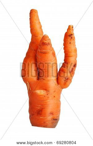 Twisted Ripe Carrot