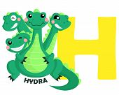 foto of hydra  - The letter H for the word hydra - JPG