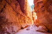 foto of hoodoo  - Amazing hoodoos in Bryce Canyon National Park in Utah USA - JPG