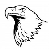 image of bald headed  - Stylized illustration of bald eagle head - JPG