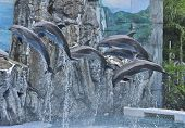 stock photo of grampus  - A Lot Of Dophin Jumping From The Water - JPG