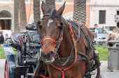 stock photo of charioteer  - chariot horse for tourist visit in spagna square in rome - JPG