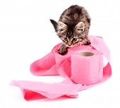 stock photo of septic  - Cute kitten playing with roll of toilet paper - JPG