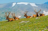 image of gang  - Gang of Elks in Colorado - JPG