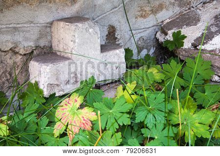 Stone Cross Behind Geranium