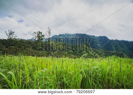 Mountain and grass field