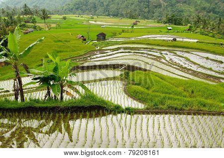 Indonesia Countryside On The Sumatra Island