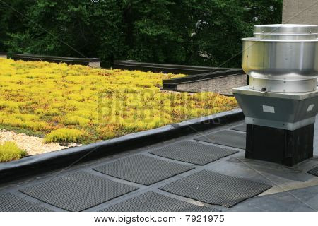 Partial Green Roof