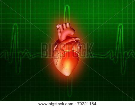 Heart Disease 3D Anatomy Illustration Green