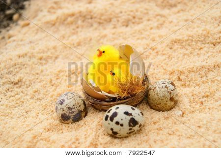 Three eggs and chickens in a nest