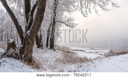 Winter. Bank of the Yenisey River.