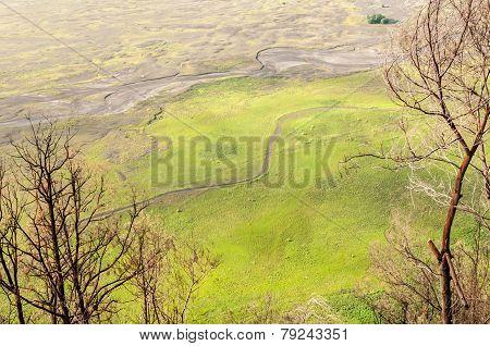 Green Prairie Landscape