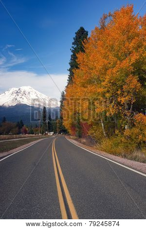 Autumn Finds Foliage Rural Road Mccloud California Mount Shasta