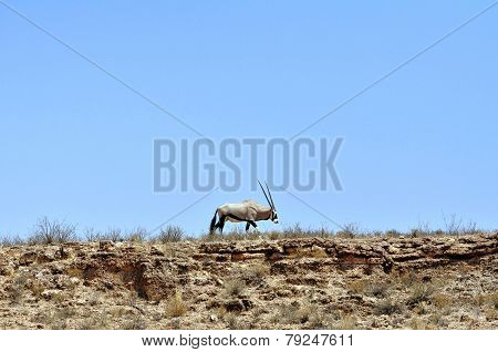 Gemsbok antelope against blue sky