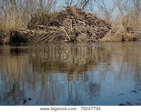 Beaver Lodges On The Banks Of The River. Branches Arranged In The House.